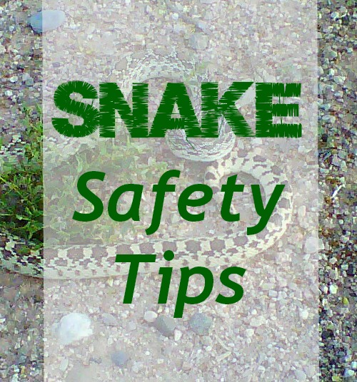East-Valley-Mom-Guide-Snake-Safety-Tips